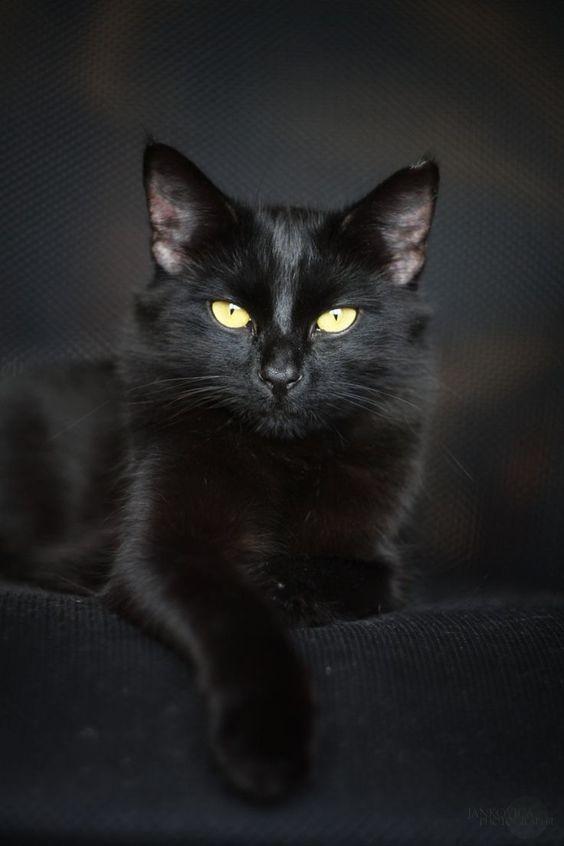 10 úžasných faktů o černých kočkách