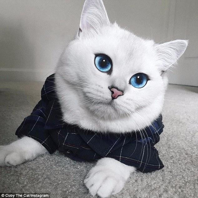 celeb velká kočička