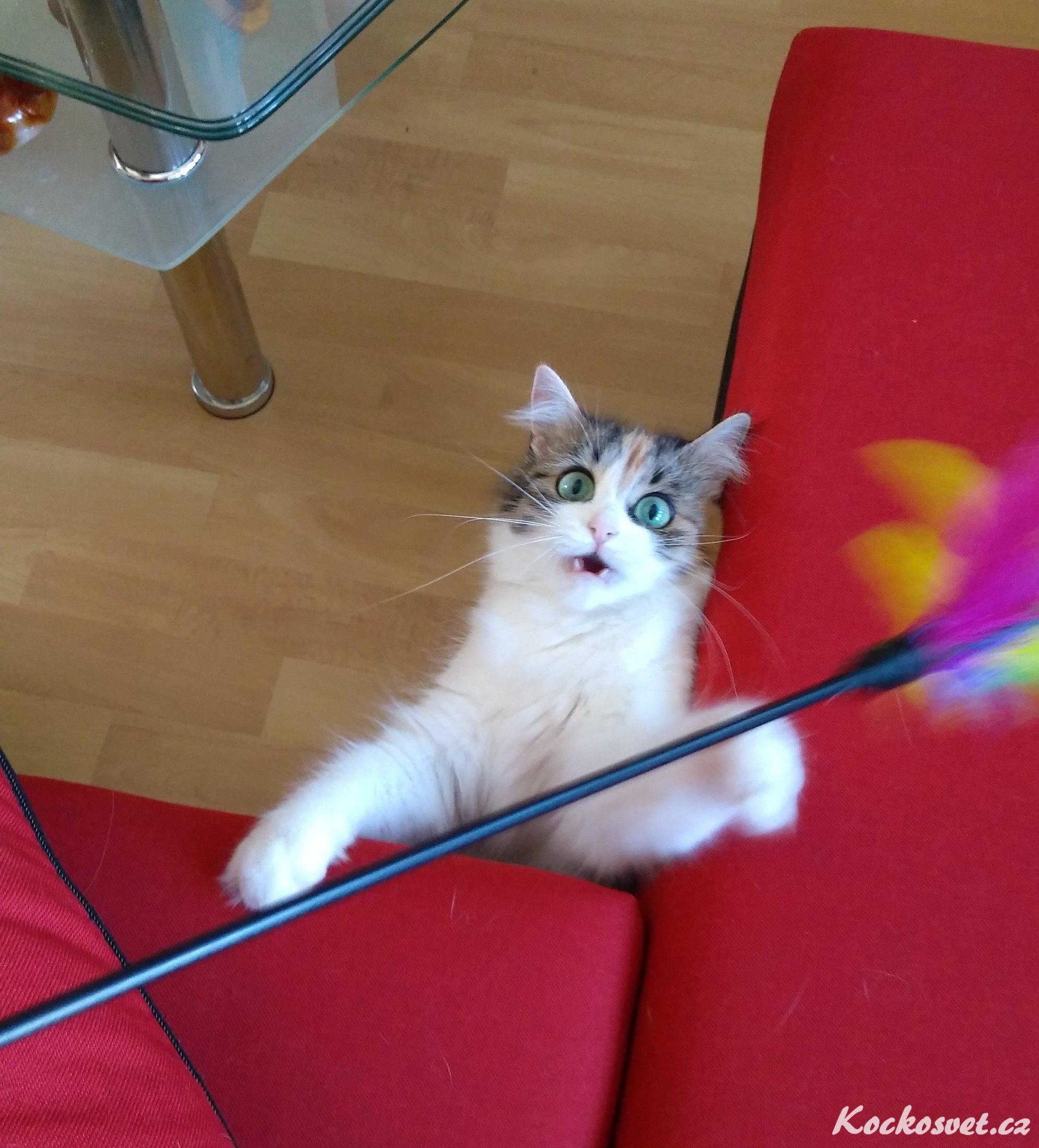 Velká kočička pic galerie