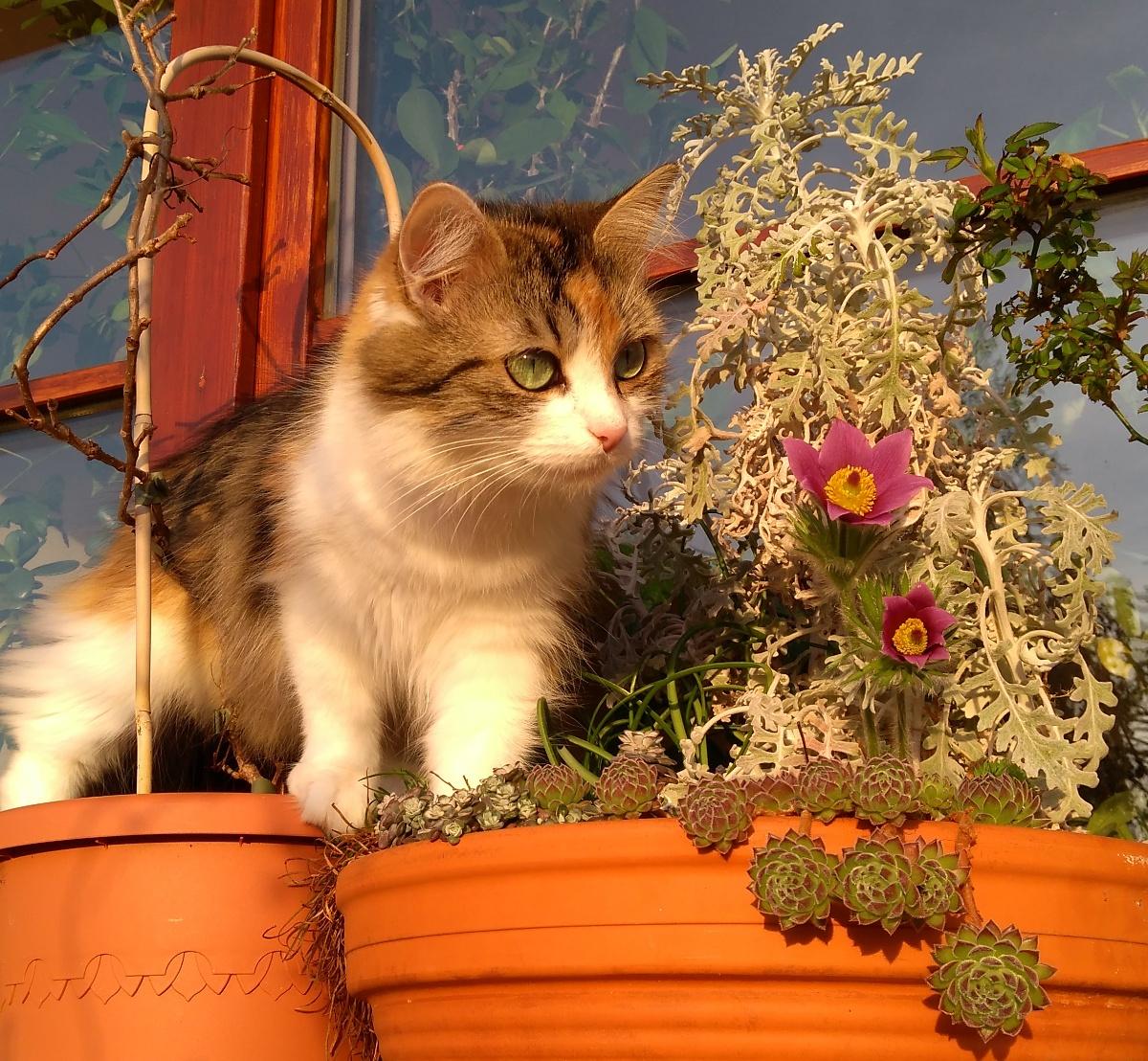 Jak pro kočku vytvořit bezpečný prostor na terase