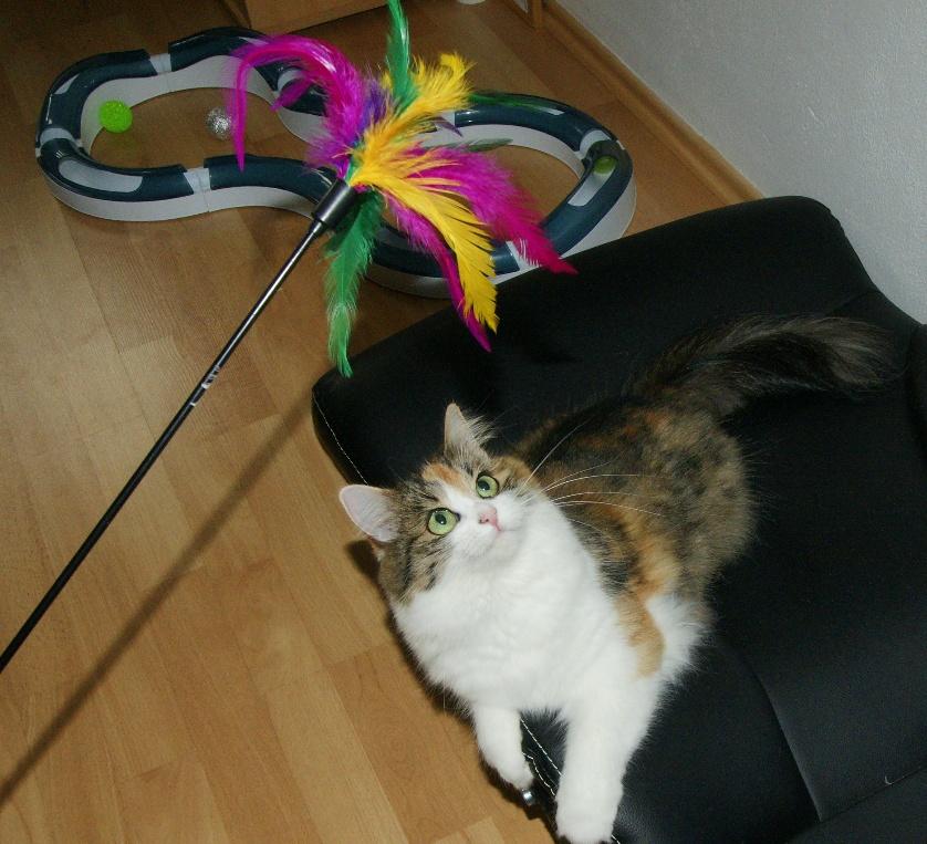 Koulodráha pro kočky