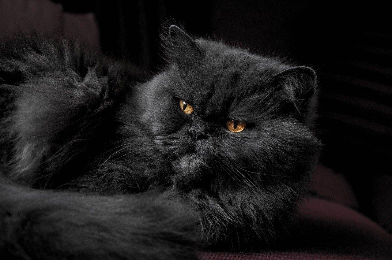 Jak kočce prodloužit život? Dáme vám pár tipů!