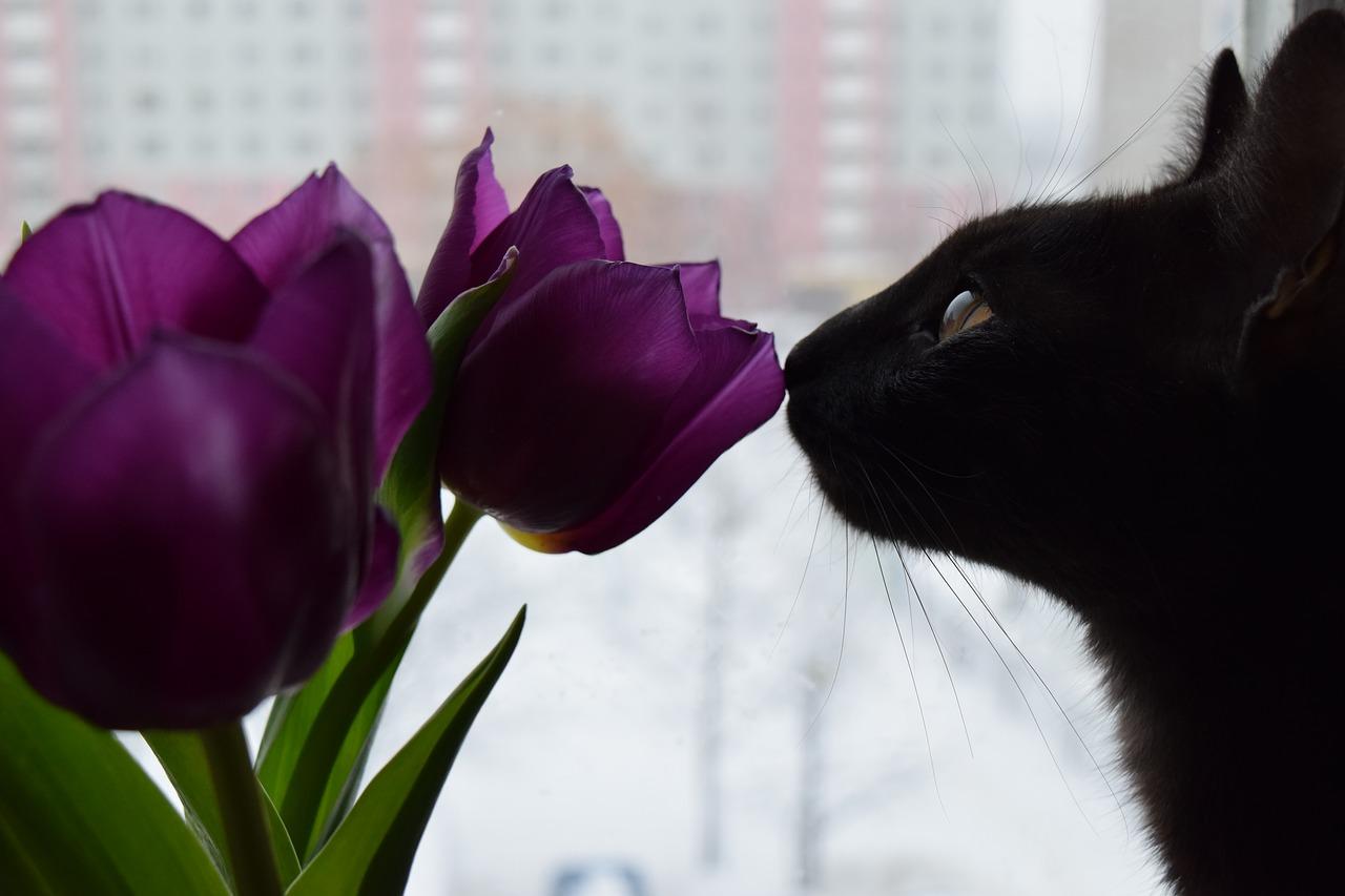 Které kytky jsou pro kočky jedovaté? Zde je 10 rostlin, které máte možná doma