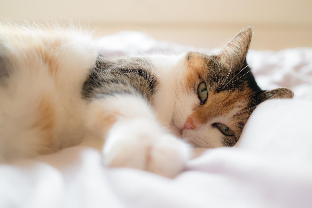 Proč kočka močí do mé postele?