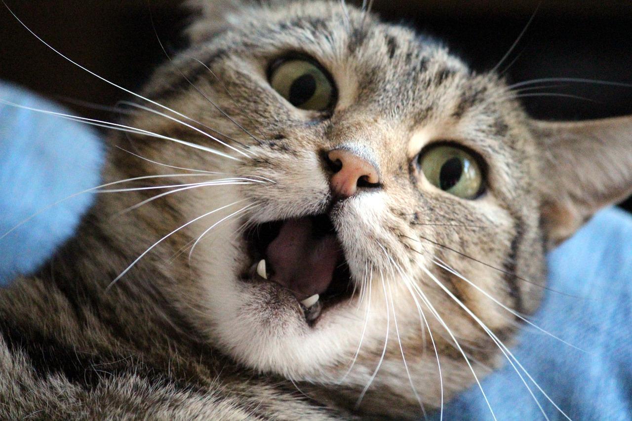 Kočka ve stresu