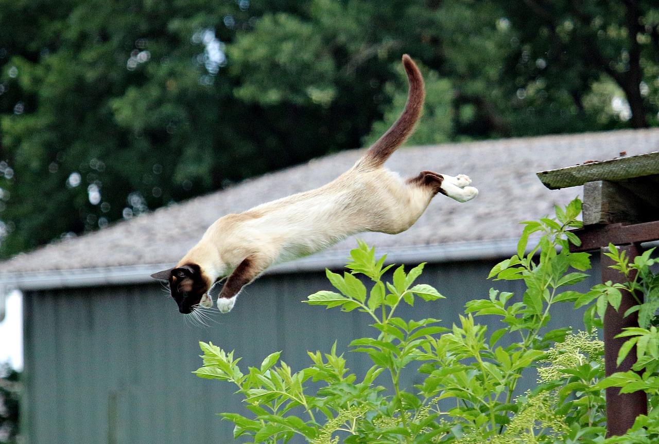 Kočičí skok