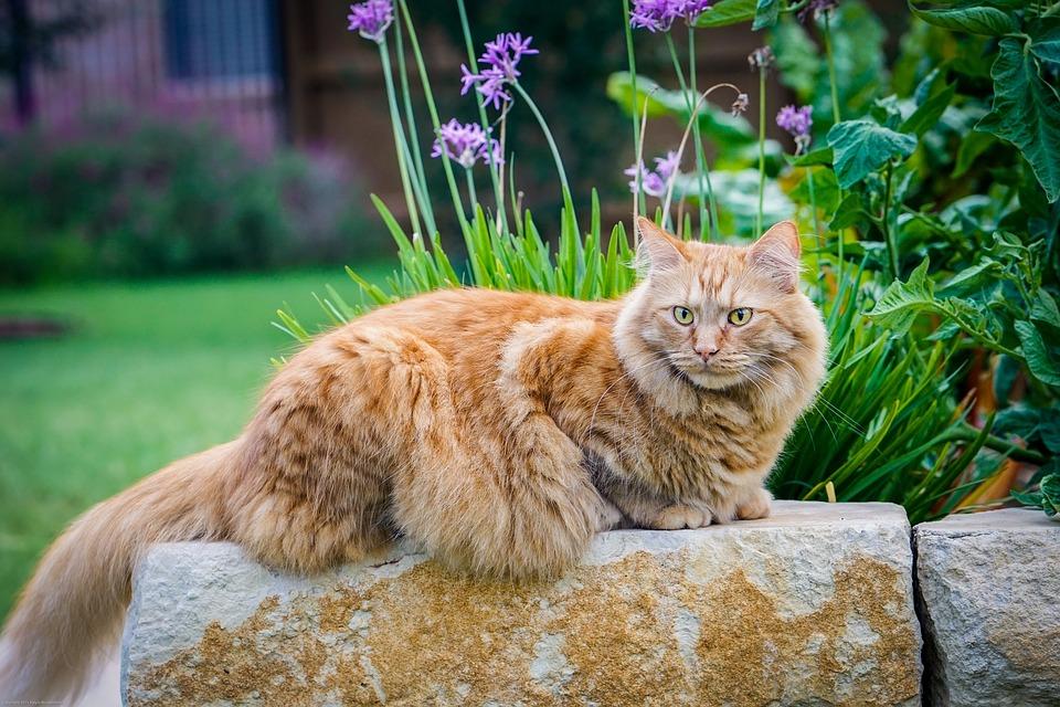 velká kočička šíří široký horká panise