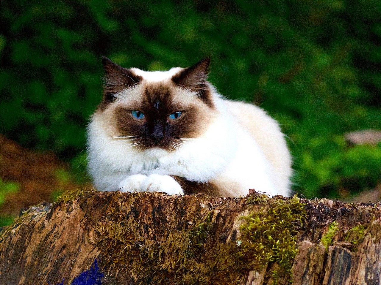 Cat-1615779 1280