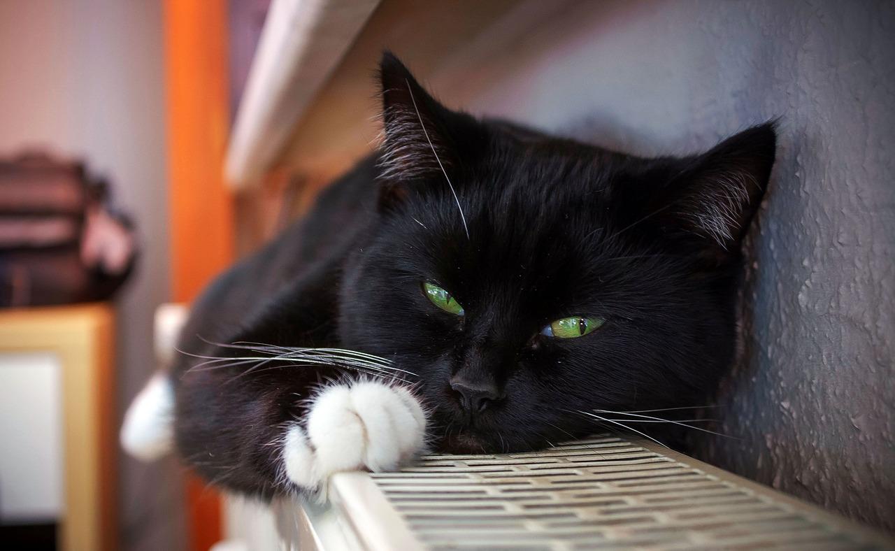 Cat-1730517 1280