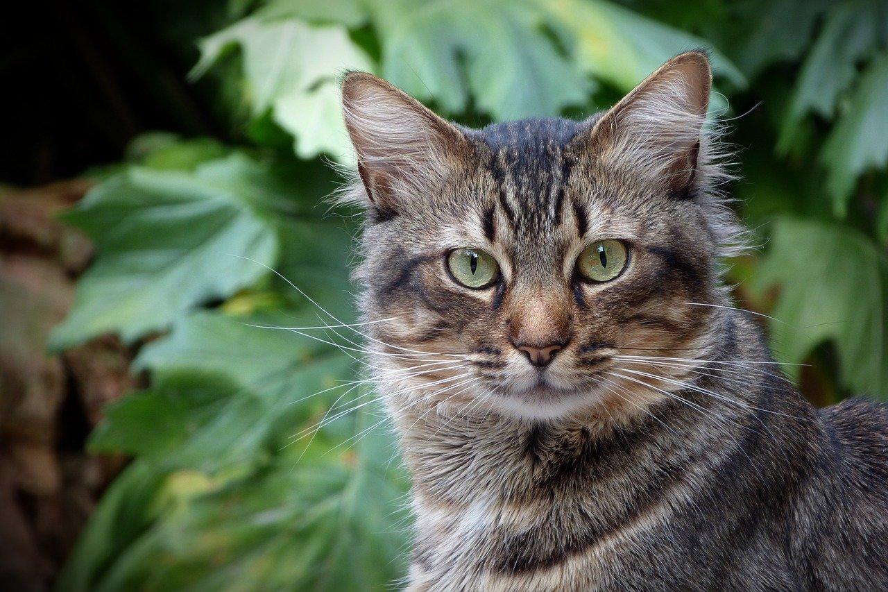 Cat-1754710 1280