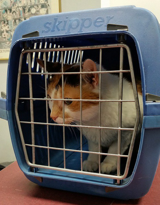 10 tipů jak nejlépe přepravovat kočku