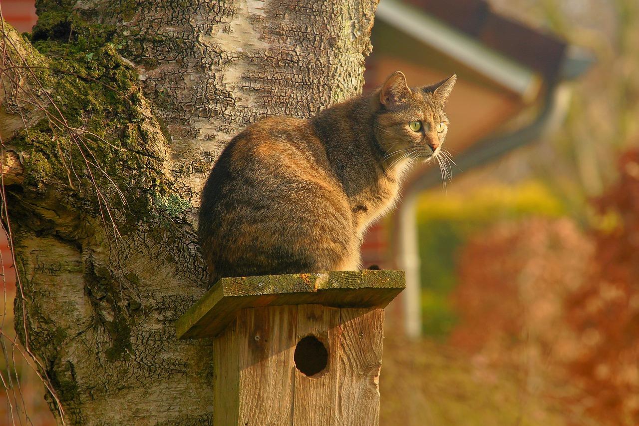 Kočka na krmítku