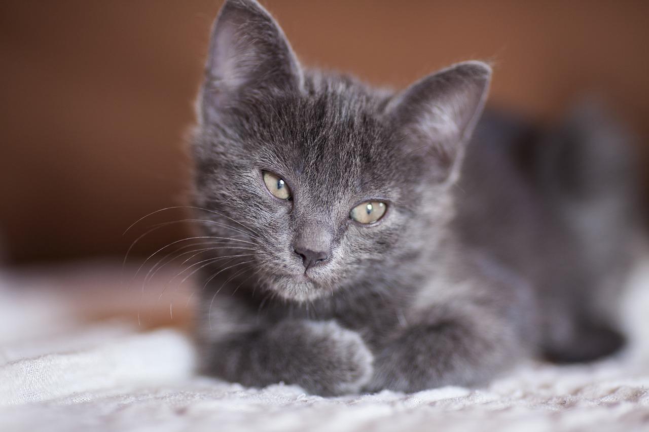 Smutná kočička