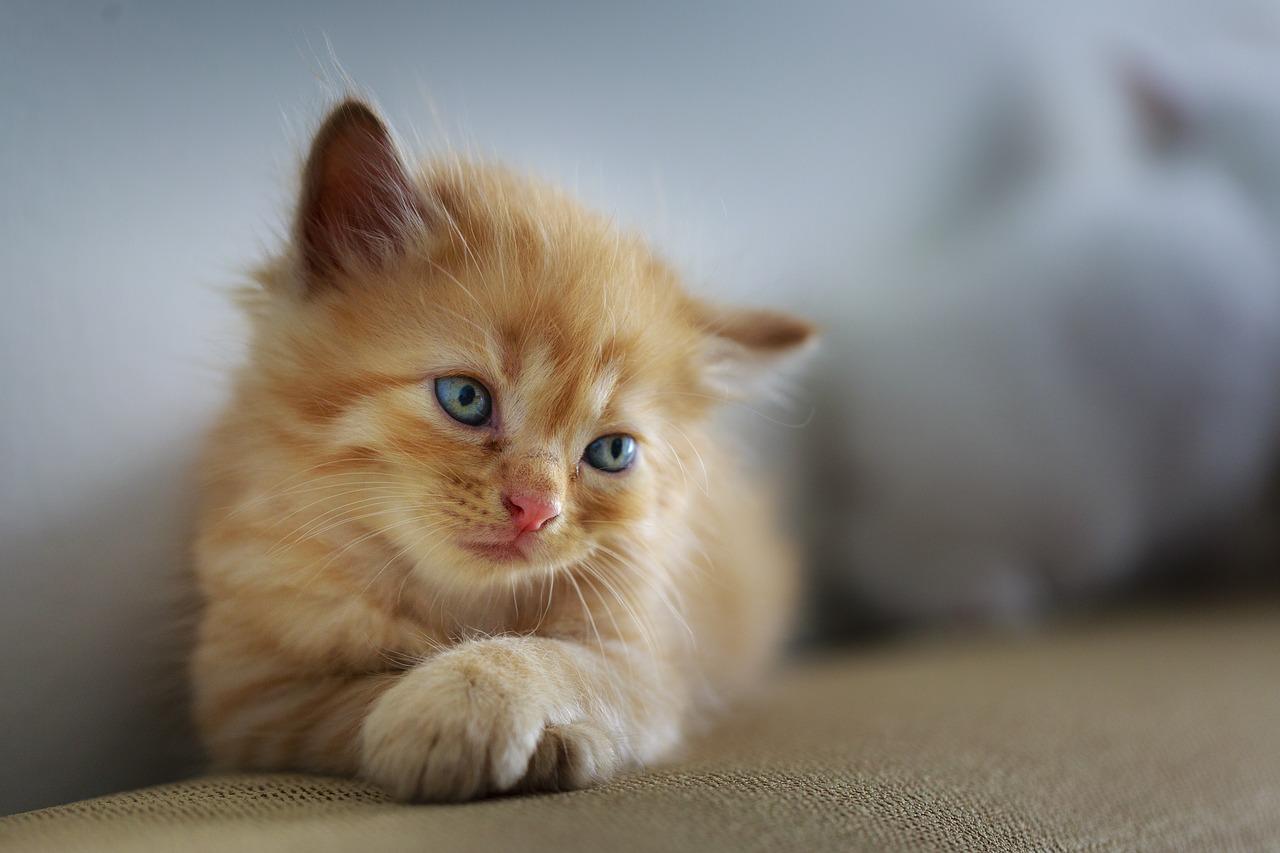 Jak poznat, že je vaše kočka nemocná