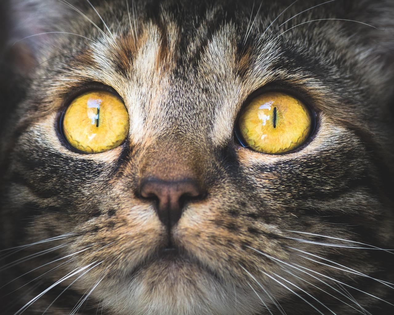 Nemoci očí u koček