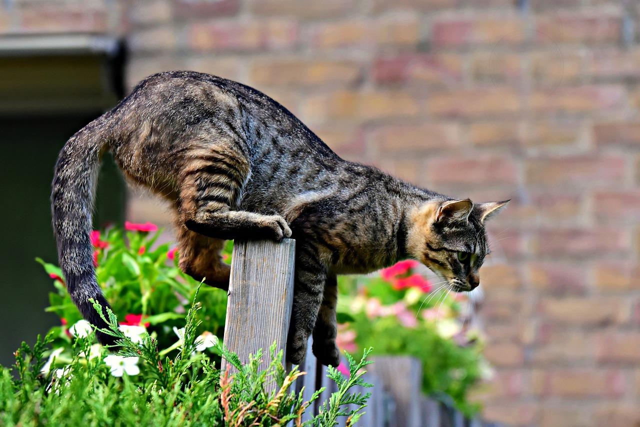 Kočka sa připravuje ke skoku