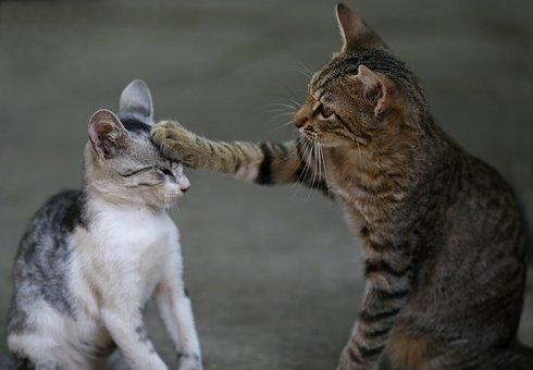 2 Kočky