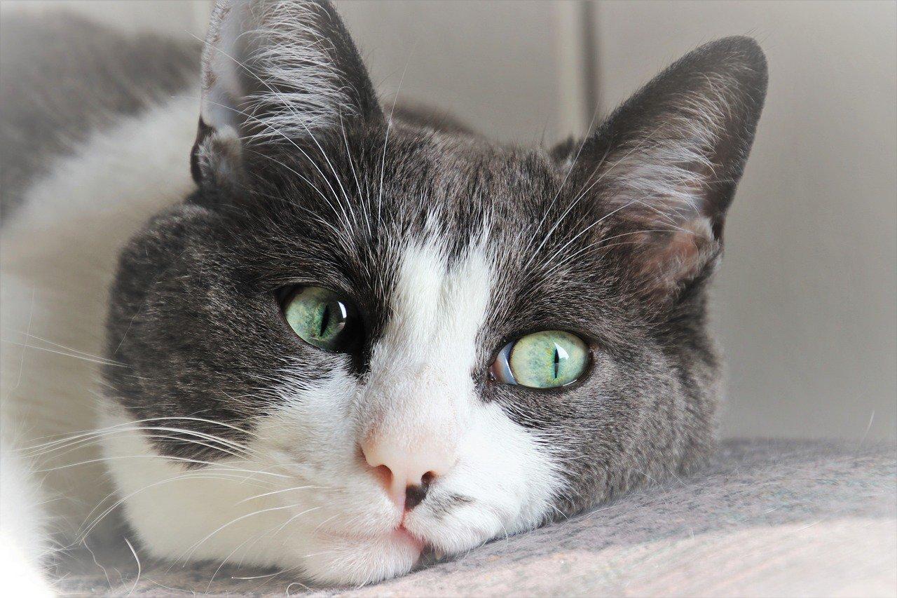 Onemocnění jater u koček
