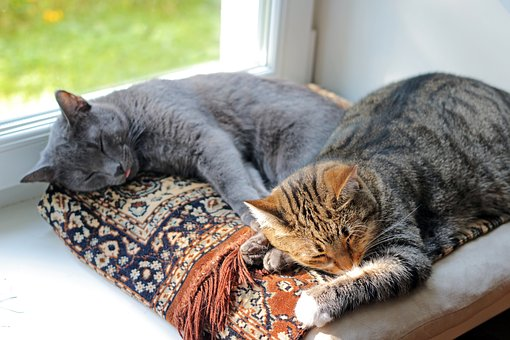 Cats-1577580 340