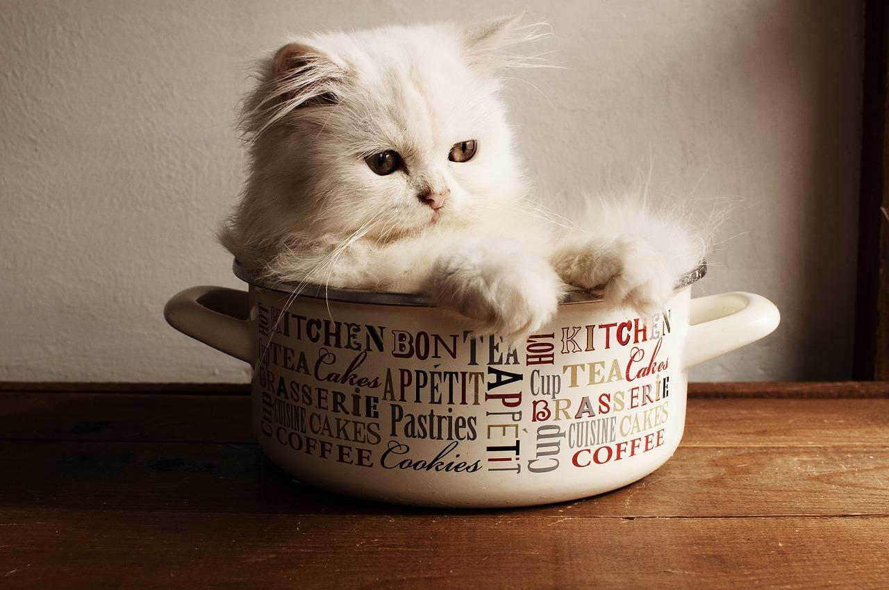 Kočička v hrnci