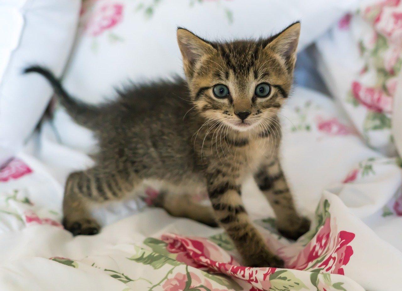 Co říká barva očí o povaze kočky