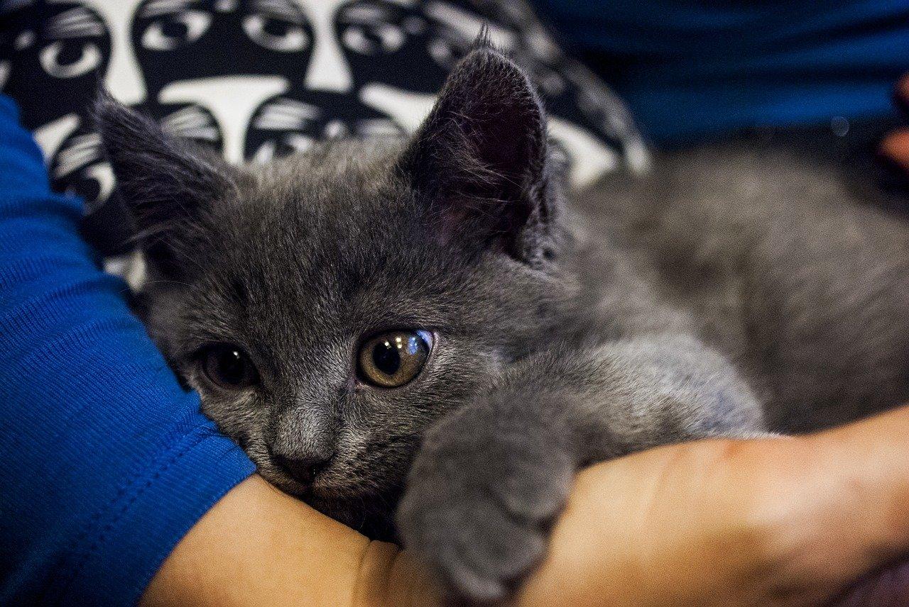 4 důvody, proč kočky rády leží na svém člověku