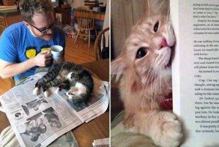 Čtění s kočkou