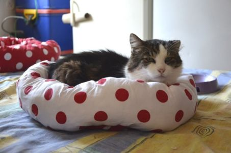 Kočka v puntíkatém pelíšku