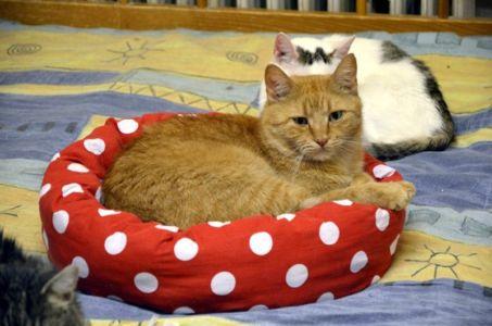 Zrzavá kočička v puntíkatém pelšku