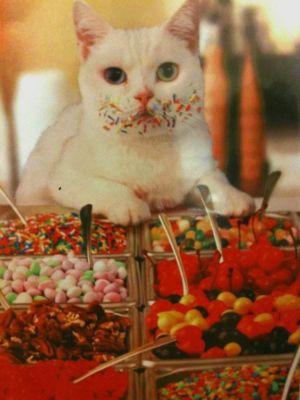 Já že jsem ochutnávala vánoční cukroví?