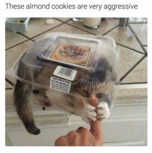 Agresivní cukroví
