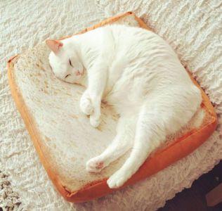 Kočičí toustík