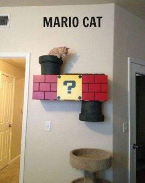 Kočka z PC hry