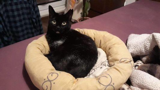 Černá kočička v pelíšku