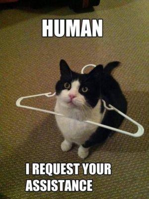 Lidský asistent vítán