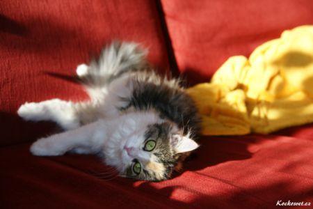 Nejkrásnější kočka na světě, protože je moje :-))