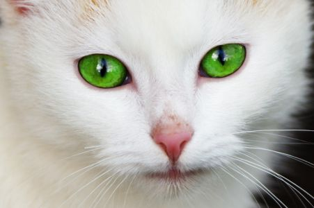 Zelené kočkooči
