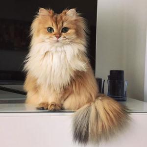 Kočka Smoothie