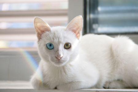 Bílá a přesto barevná