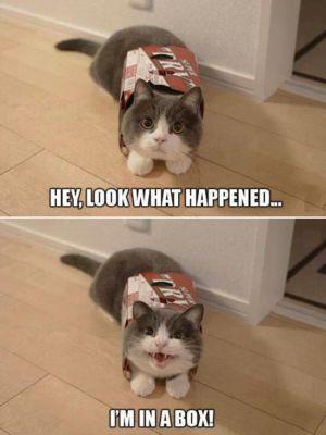 Aha co se stalo, jsem  v krabici!
