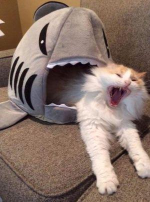 Žralooook