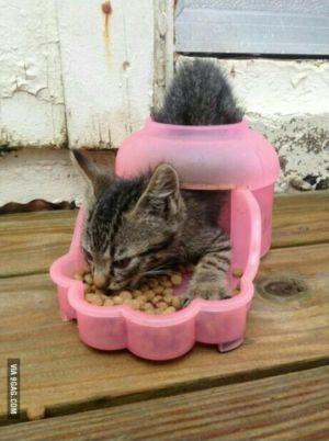 Legracní kotě