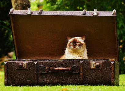 Britská kočka v kufru