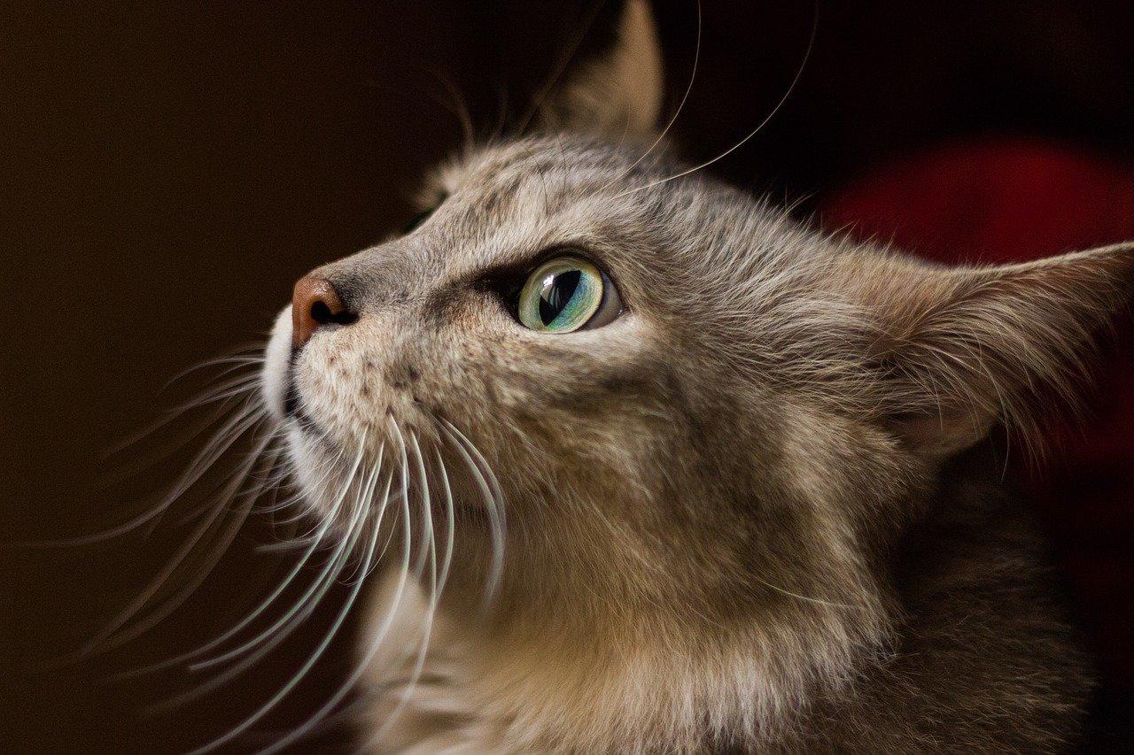 Jak správně zacházet s úzkostnými kočkami