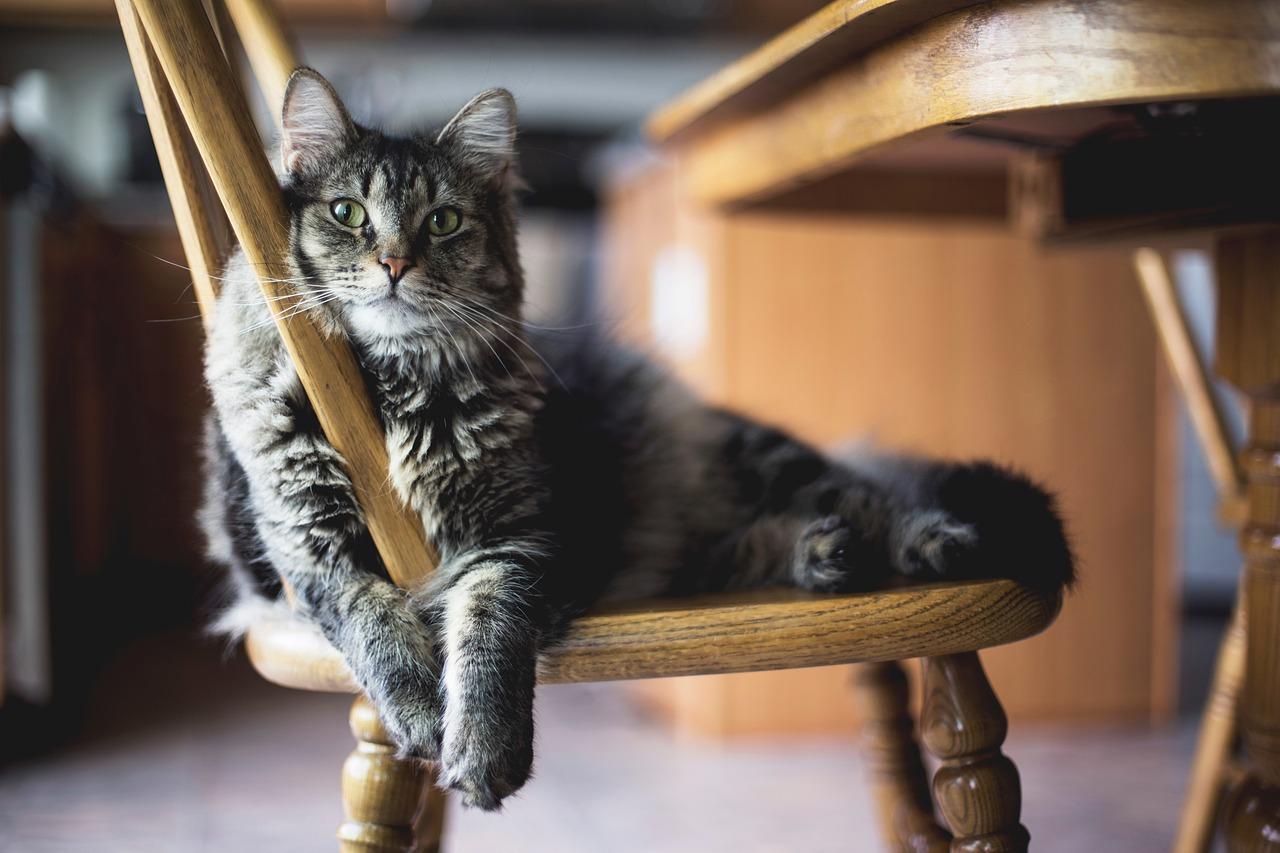 Proč moje kočka škrábe nábytek?