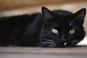 lesbička lízání kočička hd