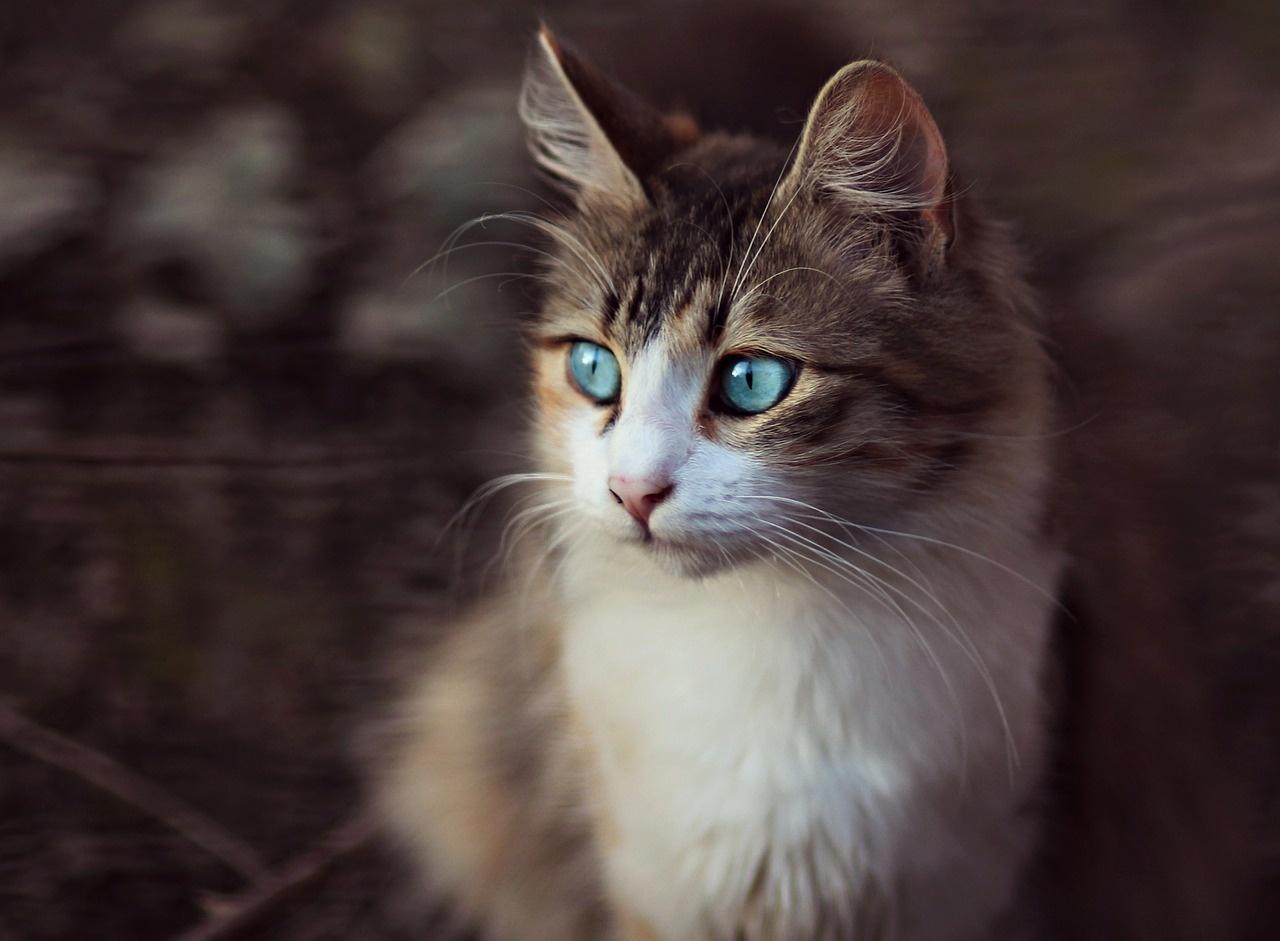 Obrázky oholených koček
